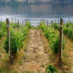 Wine Touring in British Columbia