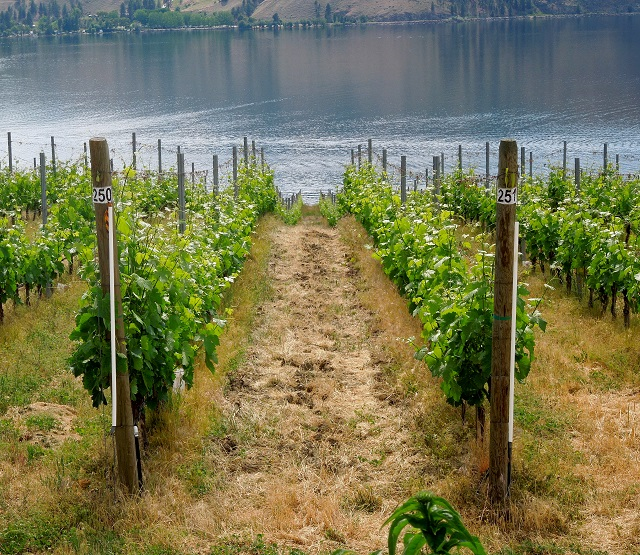 Wine touring, Okanagan Valley