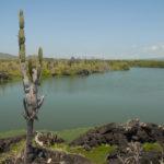 Galapagos - lagoon with cactus