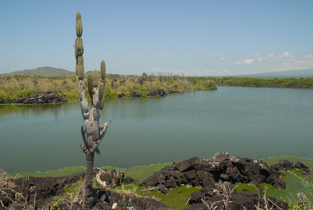 Lagoon with cactus- travel Galapagos independently