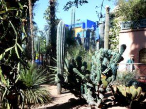 Le Majorelle cacti