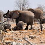 Wild African Animals Galore at Etosha