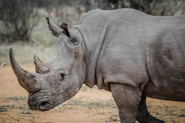 Etosha African Wildlife rhino