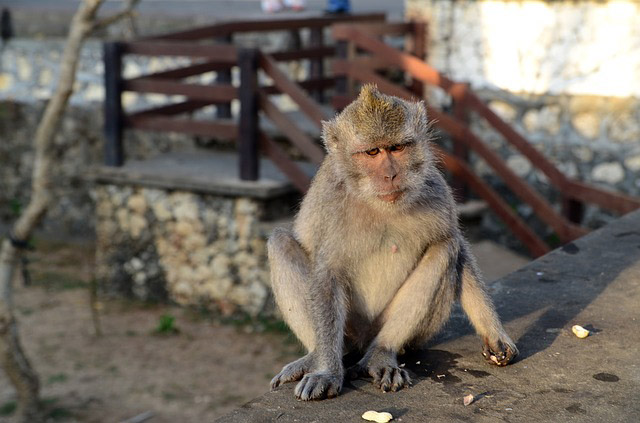 Monkey temple - travelling with kids in bali