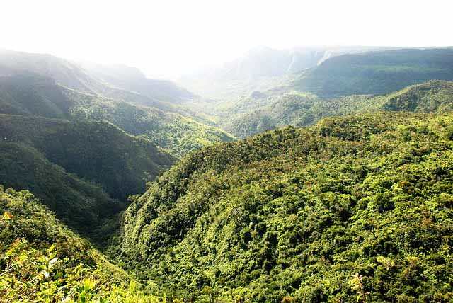 Natural Attractions in Mauritius - Forest