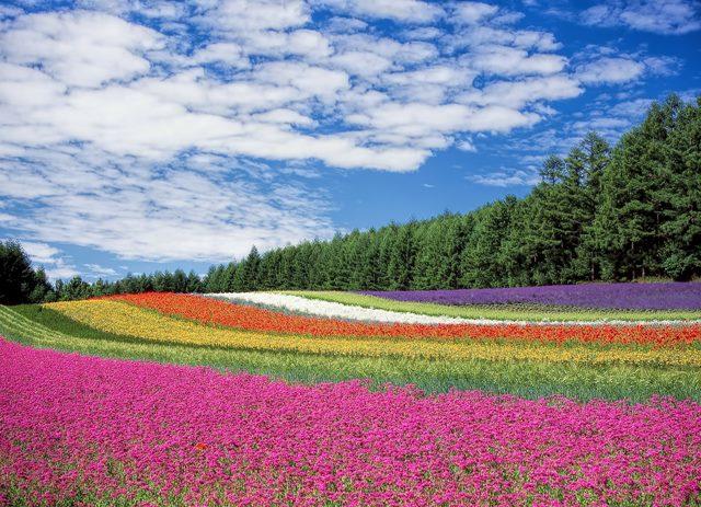hokkaido flower gardens