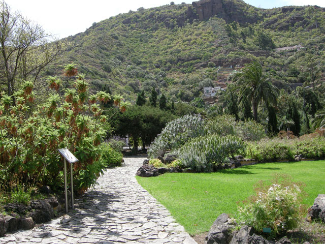Things to do in gran canaria a 5 day trip - Jardin botanico canario ...