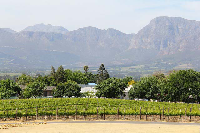 essential travel tips for south africa - vinyard