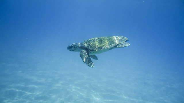 Turtles - Best Snorkelling and Diving Spots in the Greek Islands