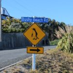 5 Essential Tips For Getting The Most Out Of Your NZ Road Trip