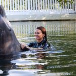 Getting to Know the Dolphins of Orlando, Florida