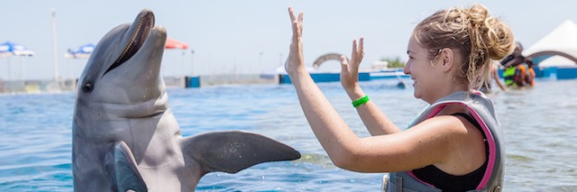 Saying hello to a dolphin in Marineland.
