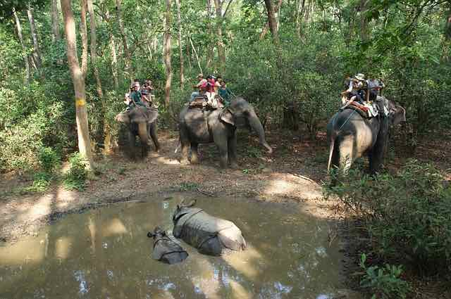 Animal welfare activists are condemning elephant