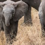10 Tips for Your First Wildlife Holiday