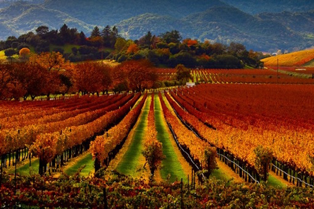 Napa valley California
