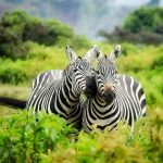 African Safari Honeymoon Destinations