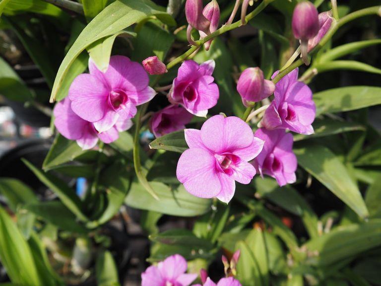 Pak-Khlong-Talat-Flower-Market