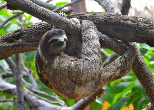 sloth dubai's top tourist attractions