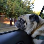 5 Tips for Traveling with Your Puppy for the First Time