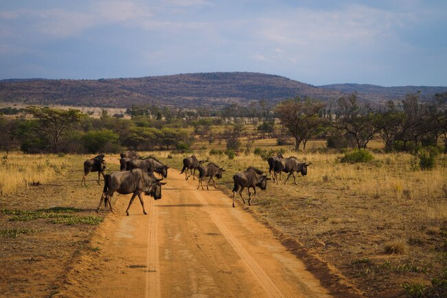 The Best Ways to Explore Africa without Leaving Home