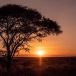 The Ultimate Guide to Traveling To Africa Virtually