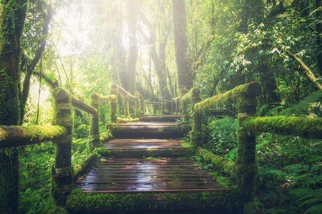 Kalladi forest