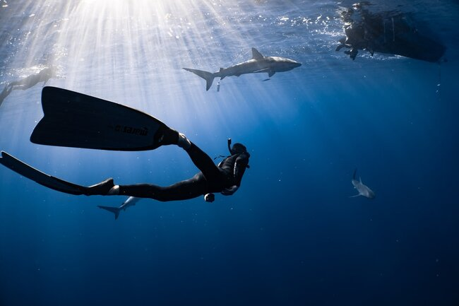 Your Guide to Diving in Komodo National Park